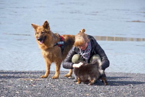 Zdjęcie przedstawia dziewczynę wraz zdwoma psami. jeden toowczarek niemiecki obrązowym umaszczeniu wczerwonych szelkach adrugi nieduzy czarny kundelek. Dziewczyna pochyla sięnadmniejszym psem idrapie go poplecach.
