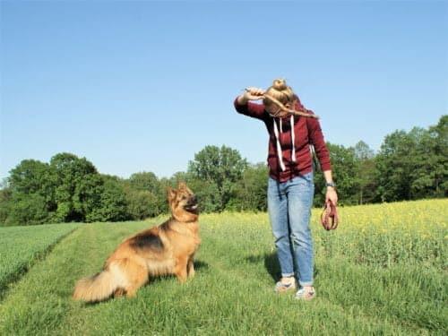Zdjęcie przedstawia dziewczynę bawiącą się zpsem. Dziewczyna trzeyma wreku patyk, któryzamierza rzucić psu, pies wyraża gotowość doaportu. Pies jest wtypie owczarka niemieckiego - koloru czarno, brązowo rudego. Zdjęcie wykonane jest nałące, naktórejrośnie żółty rzepak, awoddali widać niewielki las.
